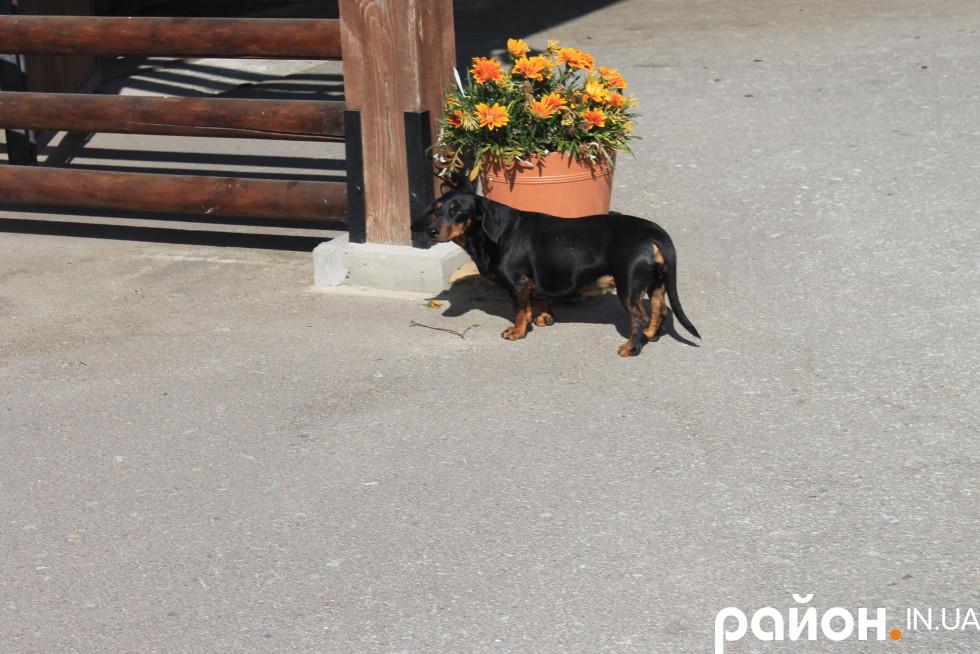 Собаки - незмінні супутники стайні