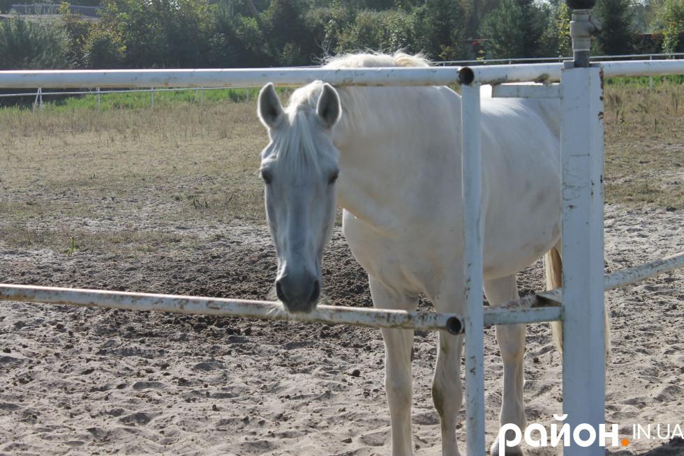 Кінь є, чекаємо принца